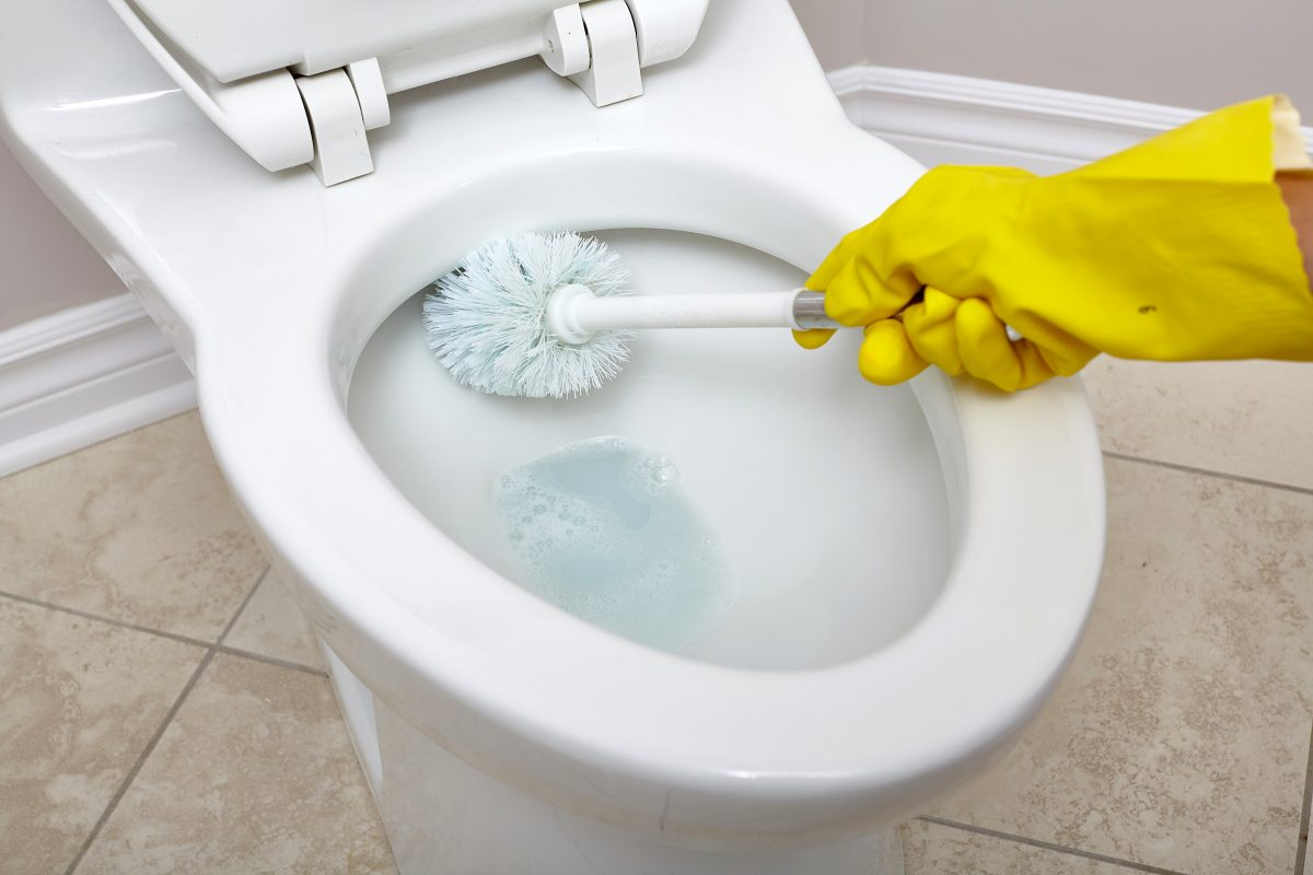 Advice For Fixing A Clogged Toilet Drainage Networks